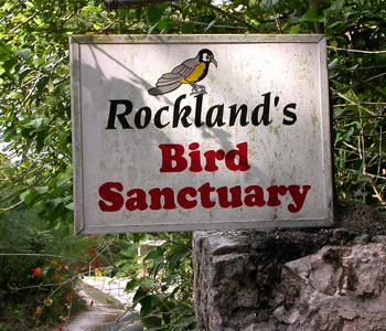 Rockland bird sanctuary birdwatching